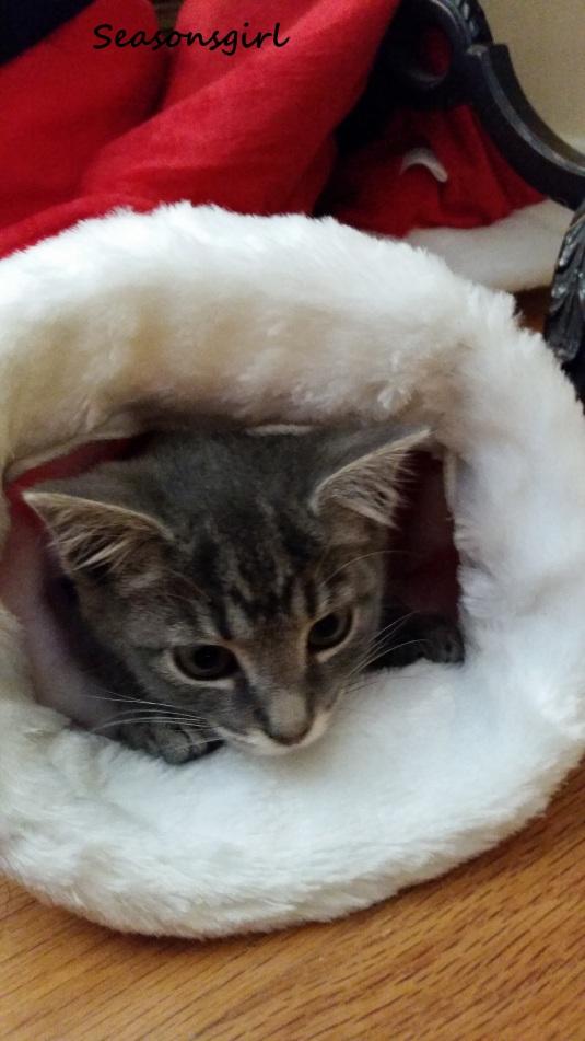Grayson Christmas