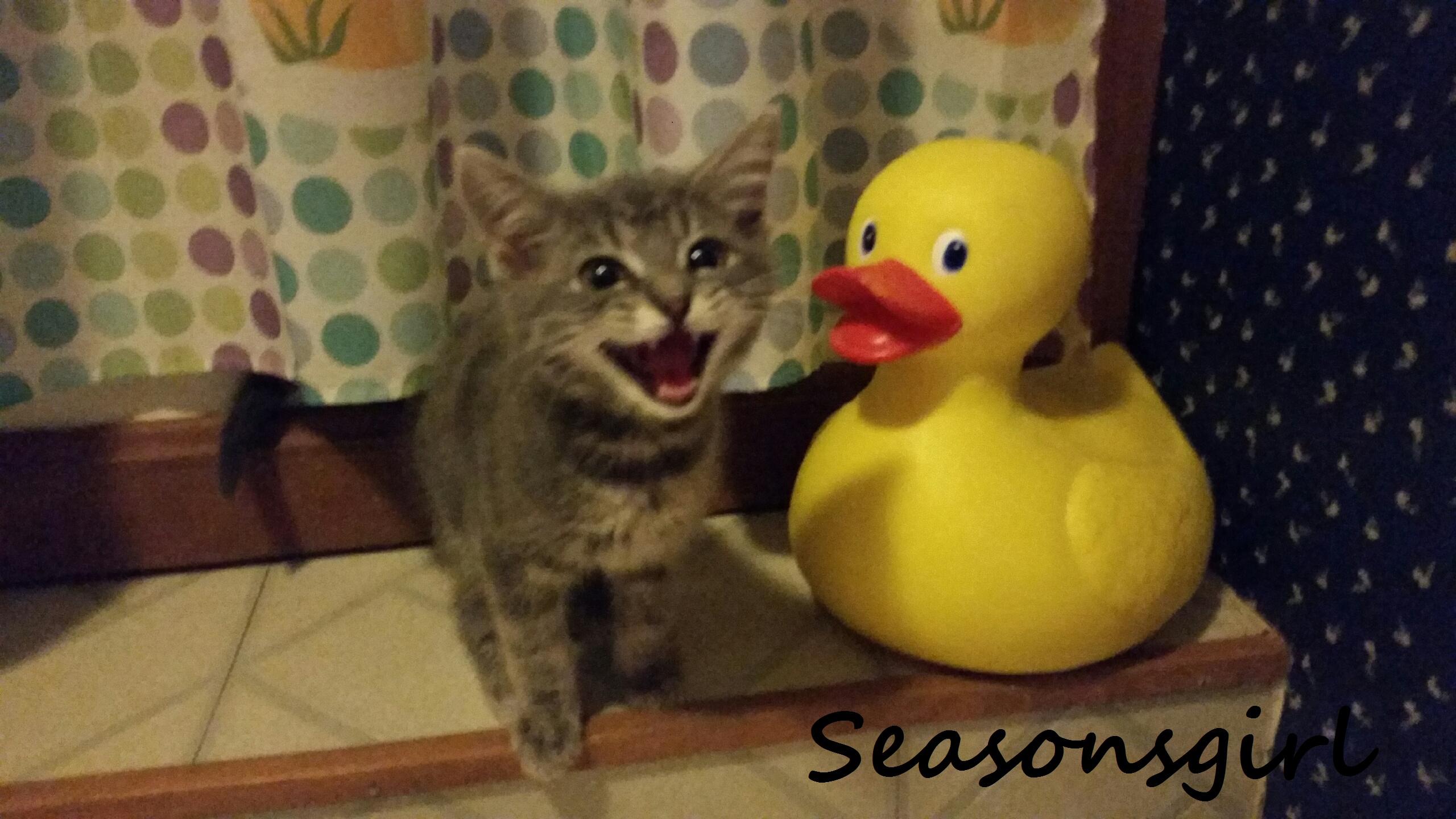 Grayson duck